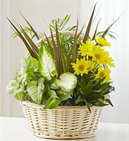 Dish Garden with Fresh Cut Flowers - Deluxe