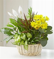 Dish Garden with Fresh Cut Flowers - Premium